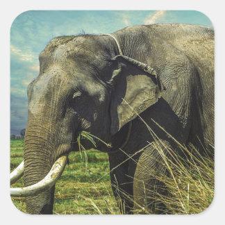 Elephant Nature Square Sticker