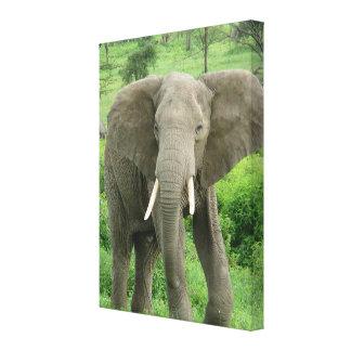 Elephant Near Ndutu Canvas Print