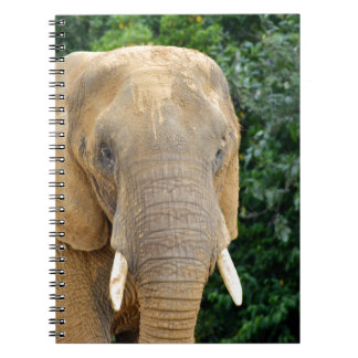 Elephant Note Books