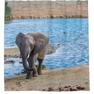 Elephant on the lake