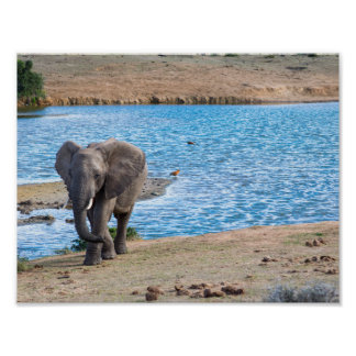 Elephant on the lake poster