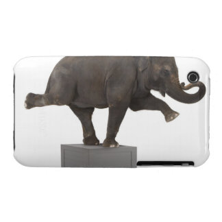 Elephant performing trick on box iPhone 3 cases