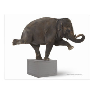 Elephant performing trick on box postcard