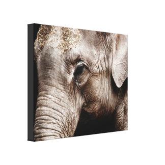 Elephant Photo Image Stretched Canvas Prints