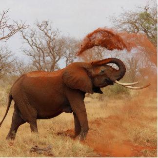 Elephant Photo Cutout