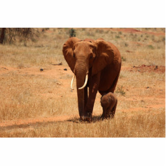 Elephant Photo Cut Out