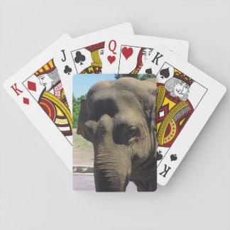 Elephant playing cards