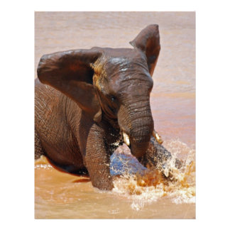 Elephant playing with water personalized letterhead