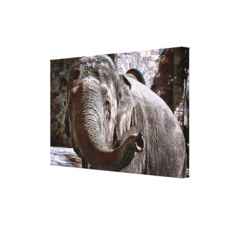 Elephant Pointing Forward with the Trunk Canvas Print