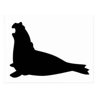 Elephant Seal Postcard Black