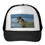Elephant Seal Roaring On Beach Trucker Hat