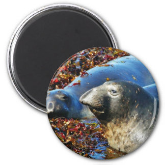 Elephant Seals Seaweed Magnet