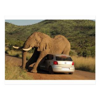 Elephant Sits On It Postcard