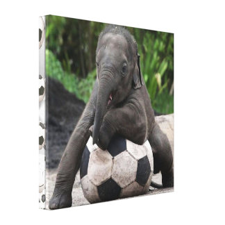 Elephant Soccer Wrapped Canvas Print