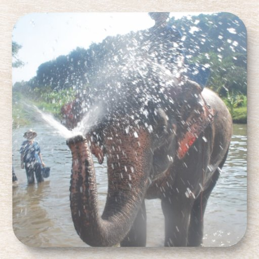 Elephant spraying water beverage coaster