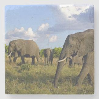 Elephant Stone Coaster