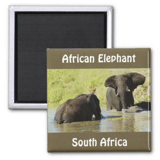 Elephant swimming (african elephant) magnet