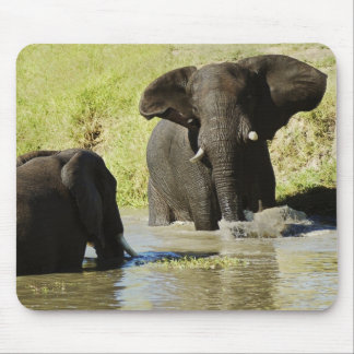 Elephant swimming mouse pad