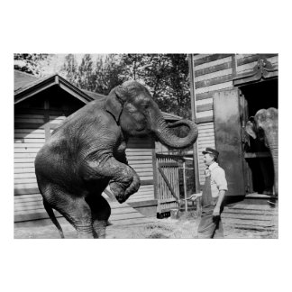 Elephant Trick, 1910s Poster