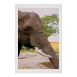 Elephant Trunk II Posters