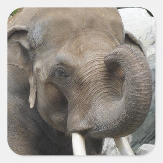 Elephant Trunk Stickers