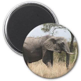 elephant tusk 2 inch round magnet