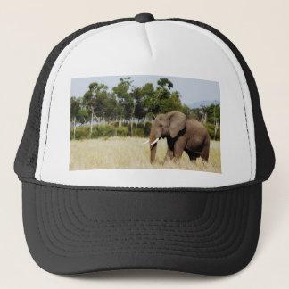 Elephant walking Masai Mara Plains Kenya hat