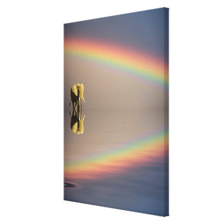 Elephant, water, and rainbow, Kenya Canvas Print