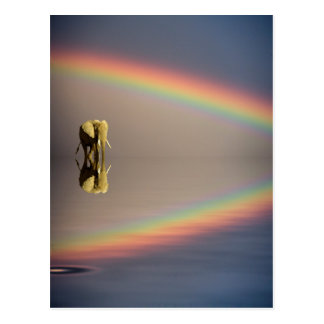 Elephant, water, and rainbow, Kenya Postcard