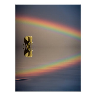 Elephant, water, and rainbow, Kenya Poster