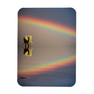 Elephant, water, and rainbow, Kenya Rectangular Photo Magnet