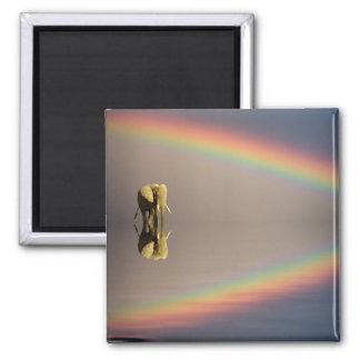Elephant, water, and rainbow, Kenya Square Magnet