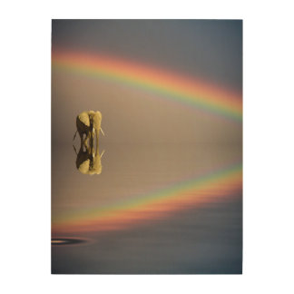 Elephant, water, and rainbow, Kenya Wood Wall Art