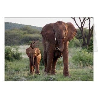 Elephant with Calf Card