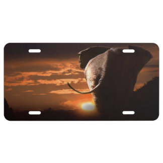 Elephant with Sunset License Plate