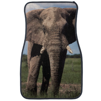Elephant young male car carpet