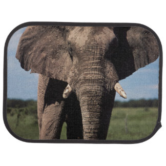 Elephant young male floor mat