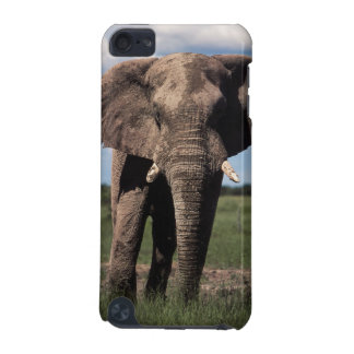 Elephant young male iPod touch (5th generation) cover