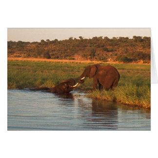 Elephants at sunset, Chobe Card