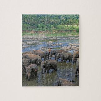 Elephants bathing in river Sri Lanka Puzzles