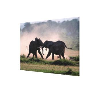 Elephants. Canvas Print