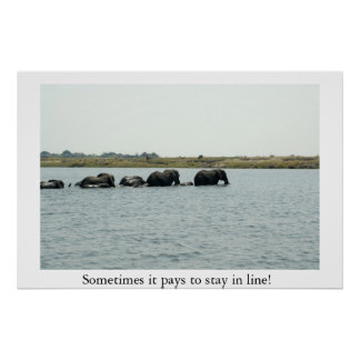 Elephants Crossing Chobe River Poster