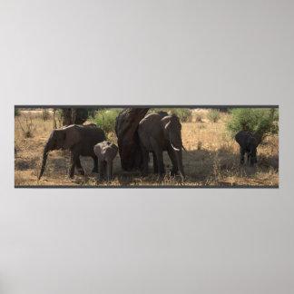 Elephant's Elegance Poster