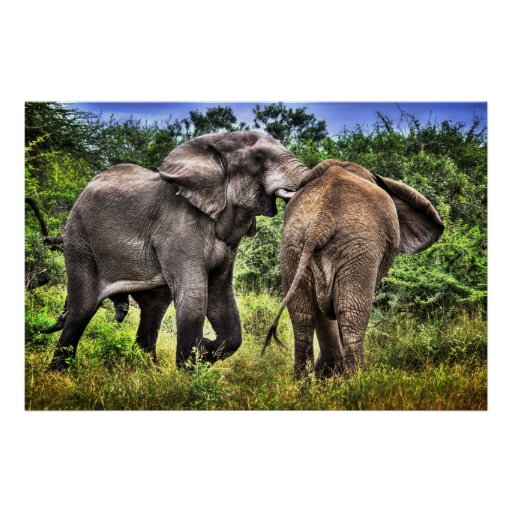 ELEPHANTS IN AFRICA POSTER