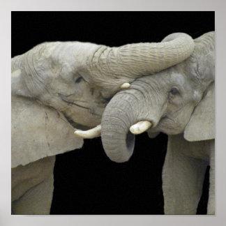 Elephants in love black poster
