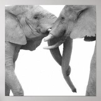 Elephants in love poster