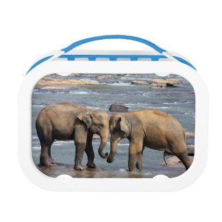 Elephants Lunch Box