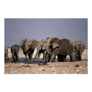 Elephant's mud bath poster