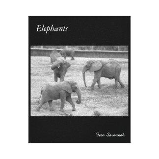 Elephants on Gallery Canvas- By Fern Savannah Canvas Print