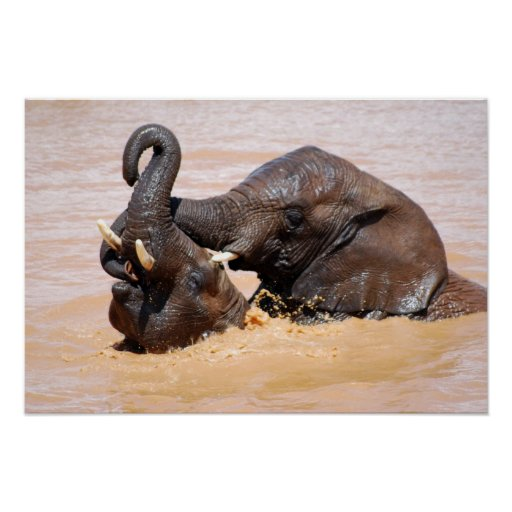 Elephants water world posters